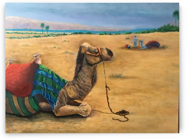 Camel Country Complete by Elizabeth J White