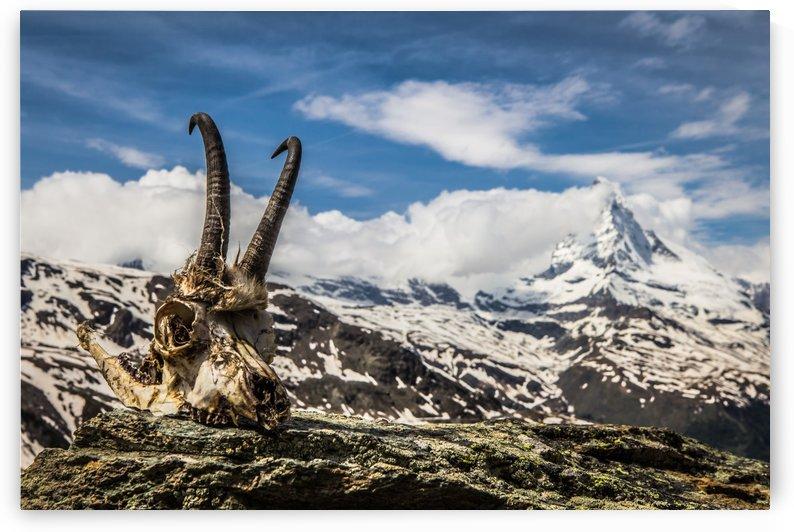 Horns Meet The Horn by Danielle Farrell