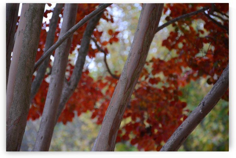 Fall Foliage Photograph by Katherine Lindsey Photography