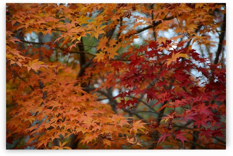 Soft Fall Foliage Photograph by Katherine Lindsey Photography