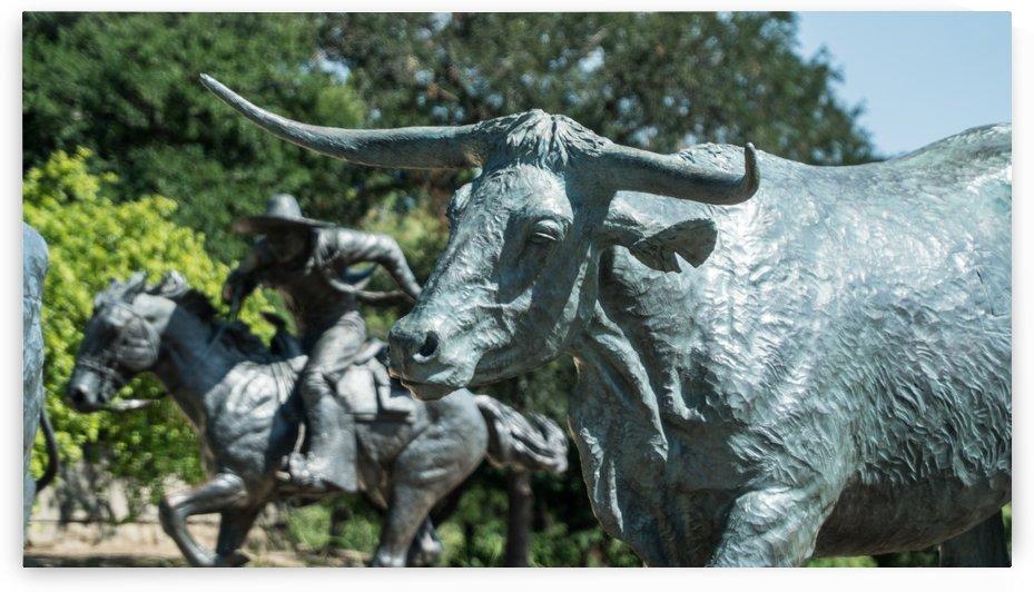 Bulls of Dallas by CWarren