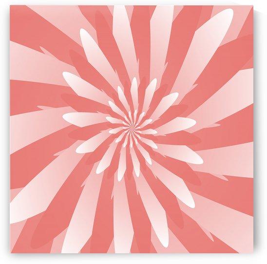 Flower Spiral Pattern  by Rizwana Khan
