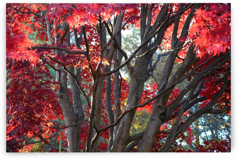 Beautiful Red Fall Foliage by Katherine Lindsey Photography