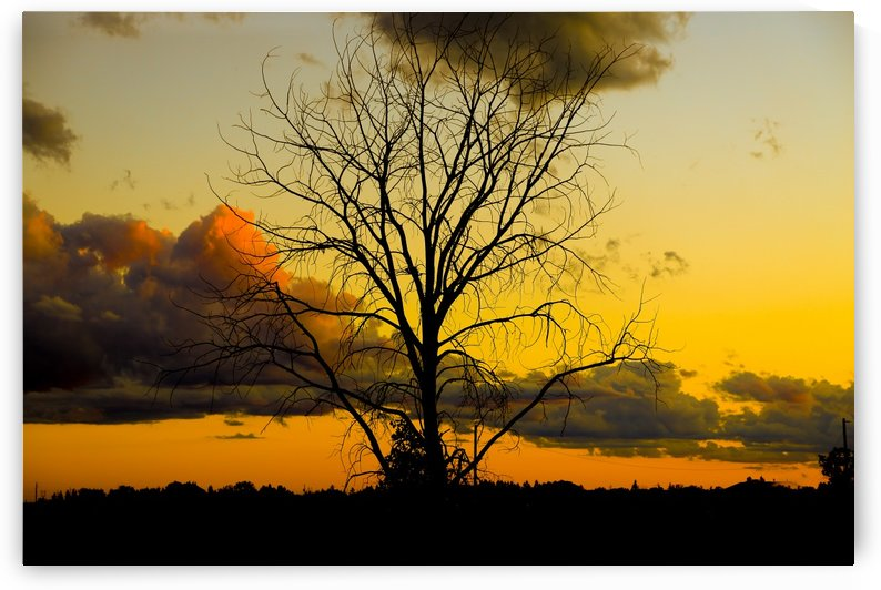 SUNSET AND TREE by Michael