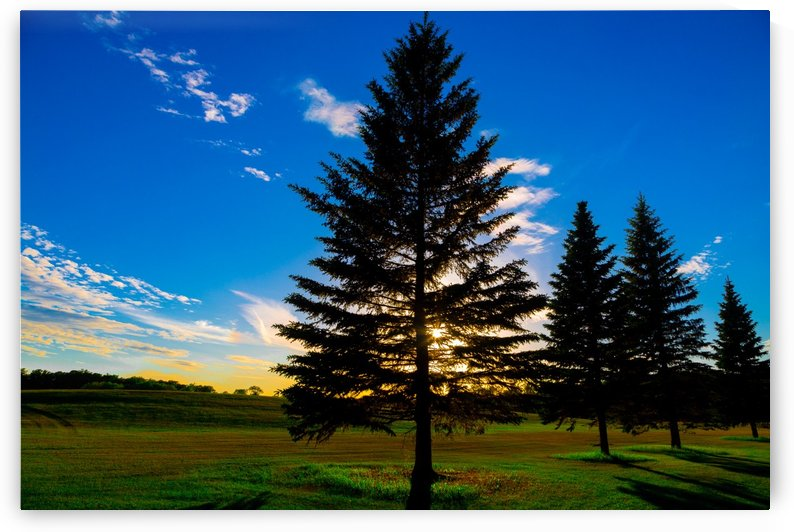 TREE AT SUNSET by Michael