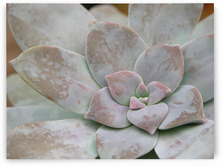 Succulent Plant Photograph  by Katherine Lindsey Photography