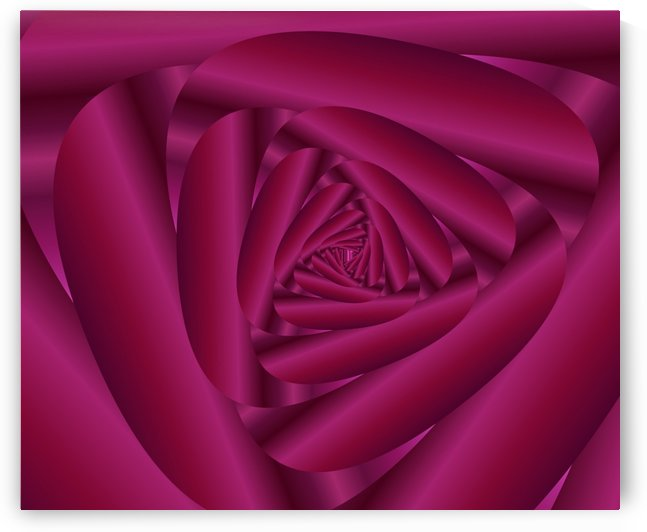 Pink Color Rose Swirl Art by Rizwana Khan