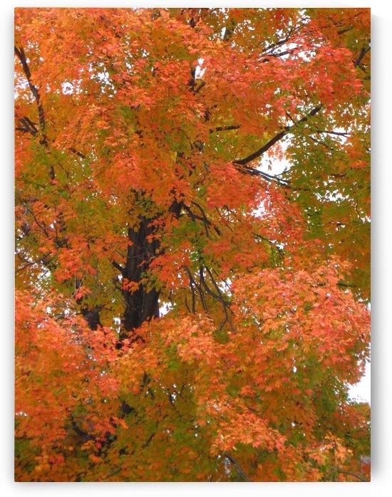 Beautiful Fall Foliage Photograph by Katherine Lindsey Photography