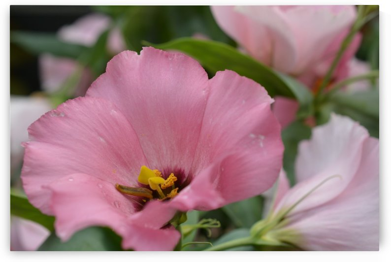Pink Flower Garden Photograph by Katherine Lindsey Photography