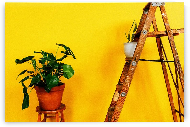 Yellow 08_OSG by One Simple Gallery