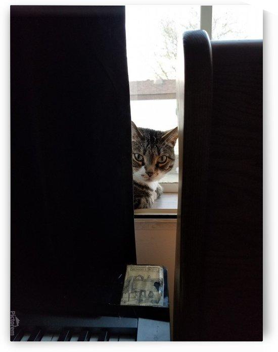 peeking cat by Wendy A Rohn