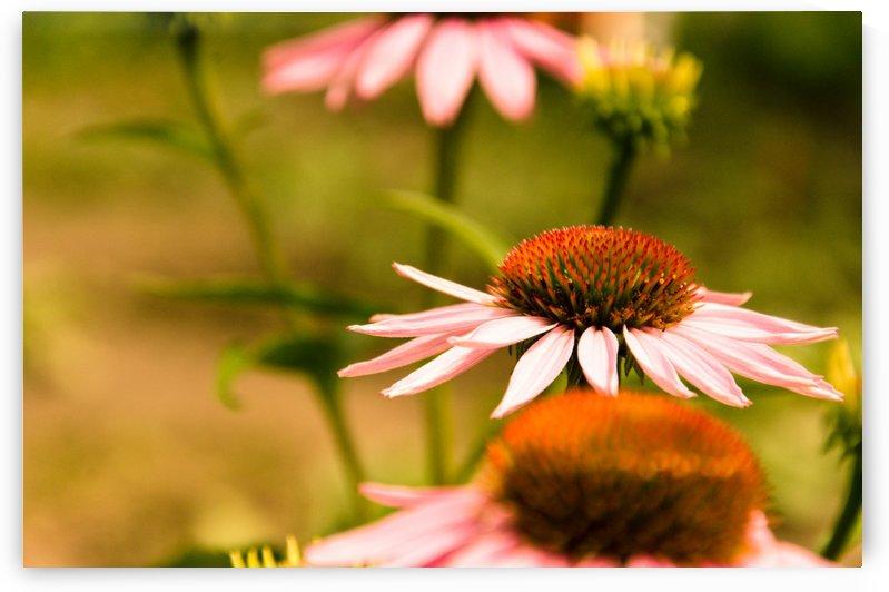 Like Sunflowers by Ann Romanenko