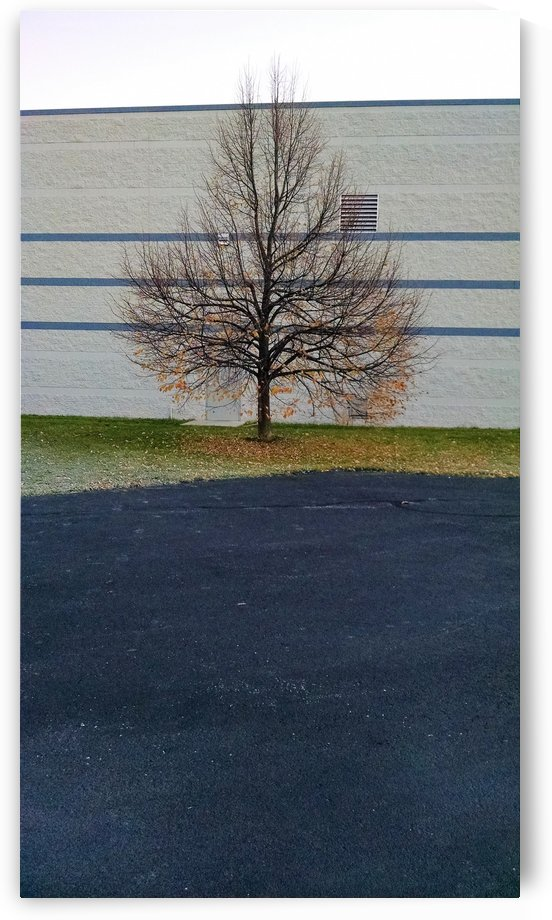 fall at work by Wendy A Rohn