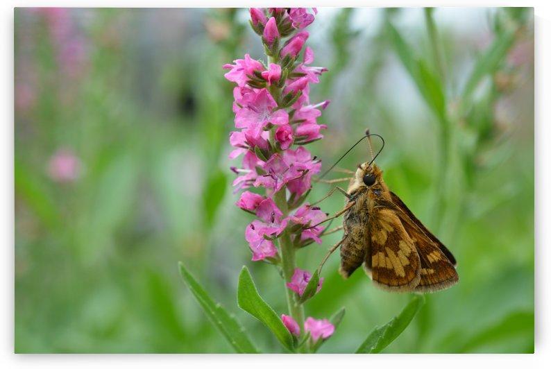 Butterfly Photograph by Katherine Lindsey Photography