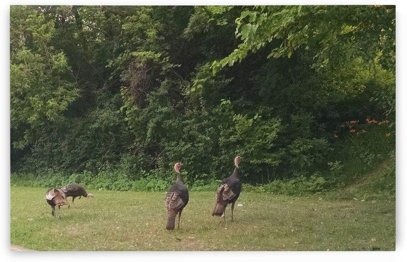 turkey field by Wendy A Rohn