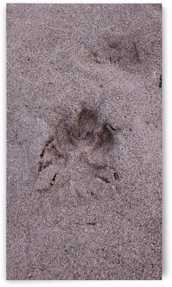 sandy paw by Wendy A Rohn