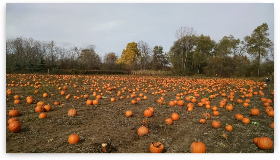 afternoon pumpkins by Wendy A Rohn