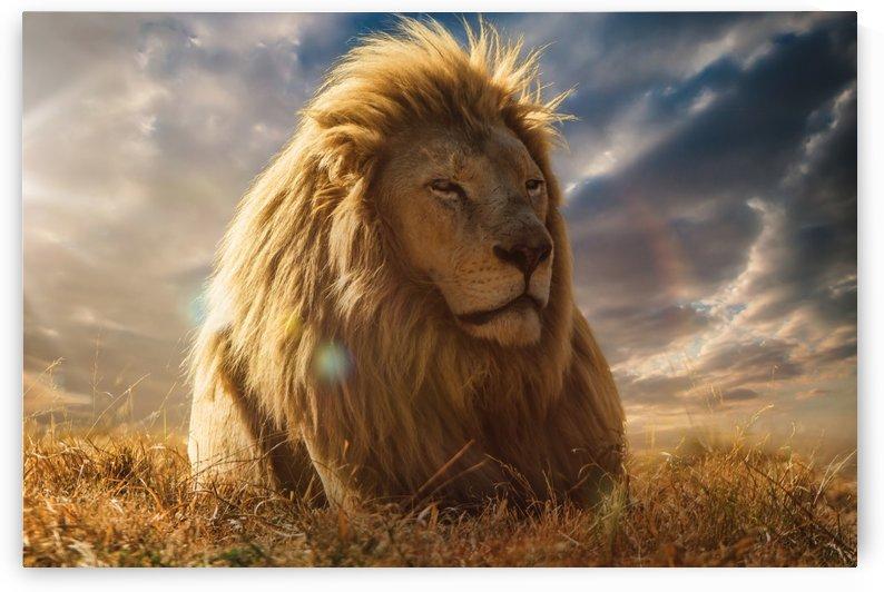 The Big King by Jackson Carvalho
