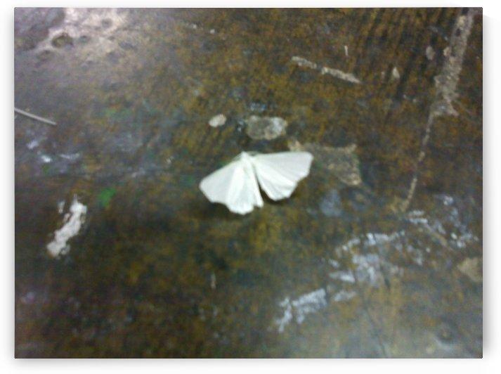 nighttime moth by Wendy A Rohn