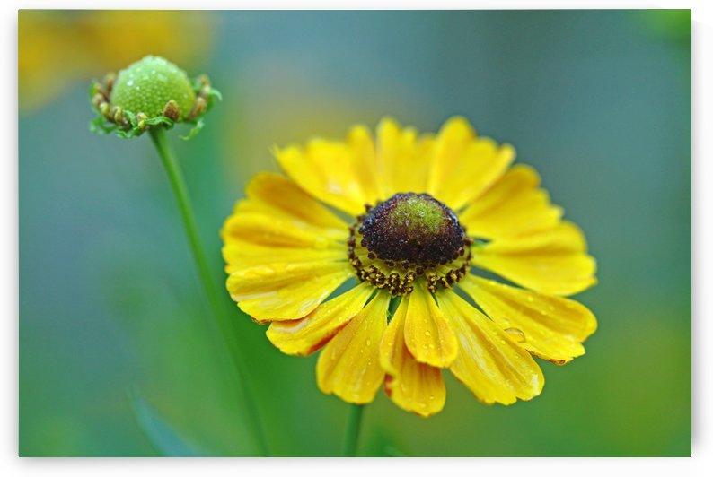 Helens Flower by Deb Oppermann