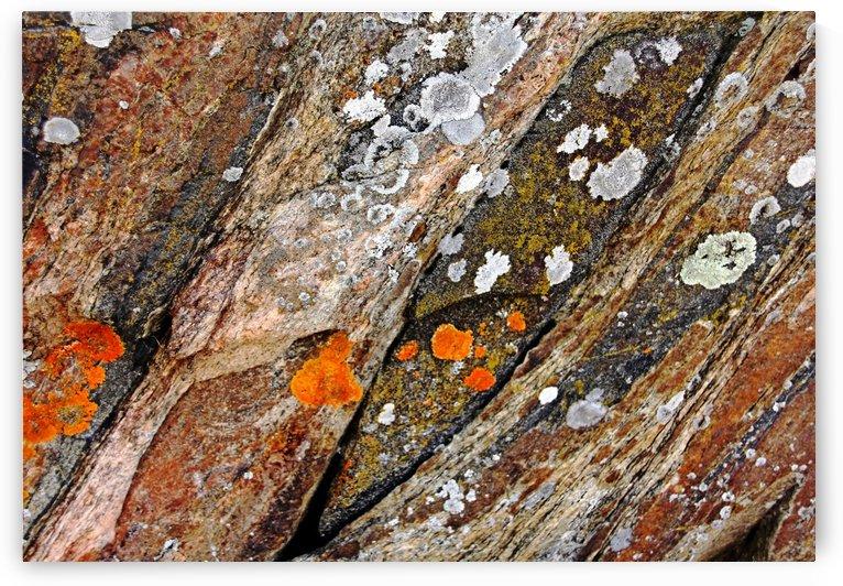Lichen On Rock by Deb Oppermann