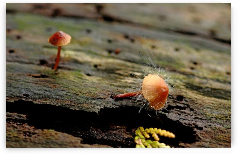 Tiny Life In The Woods by Deb Oppermann