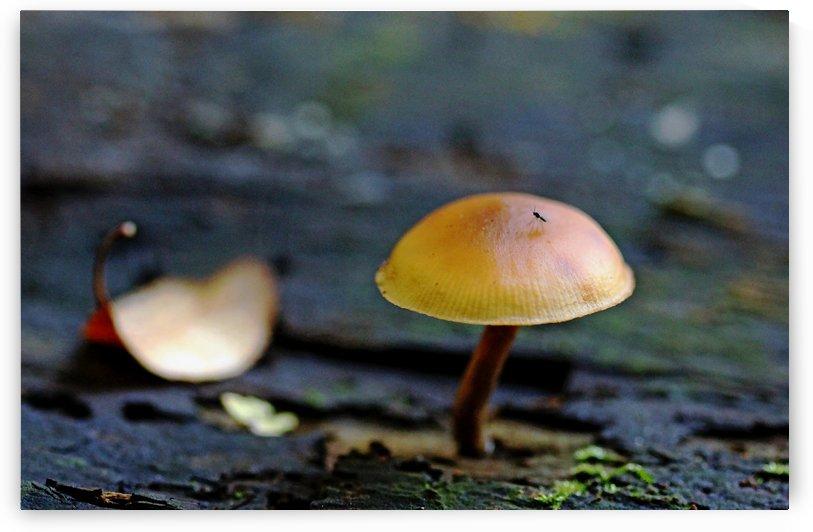 Tiny Mushroom by Deb Oppermann