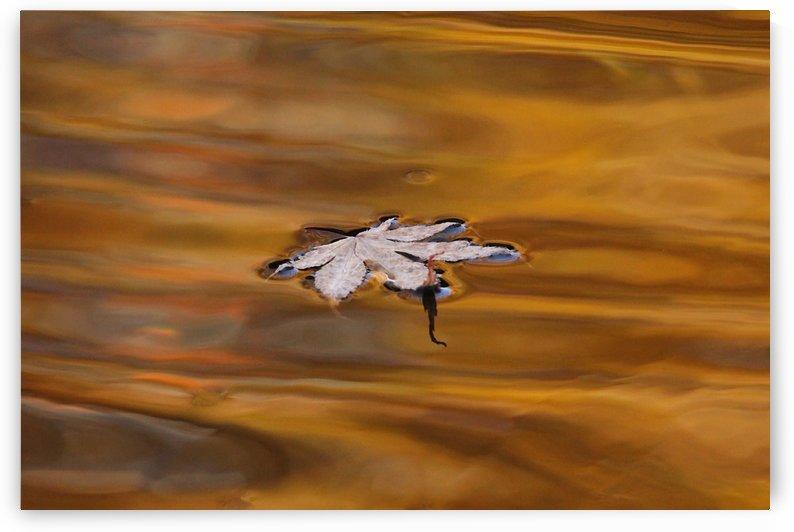 Autumn Drift by Deb Oppermann