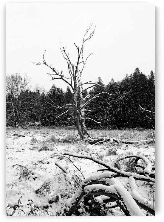 Winter Deadwood Black And White by Deb Oppermann