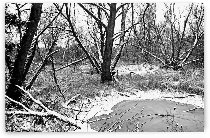 Pond In The Woods Black And White by Deb Oppermann