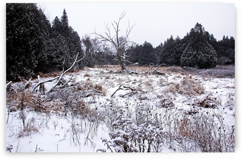 Quiet Winter by Deb Oppermann