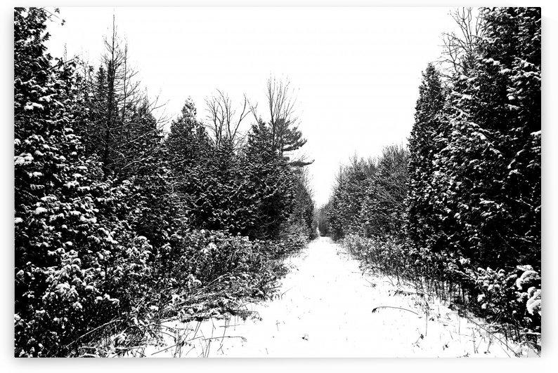 Winter Woods by Deb Oppermann