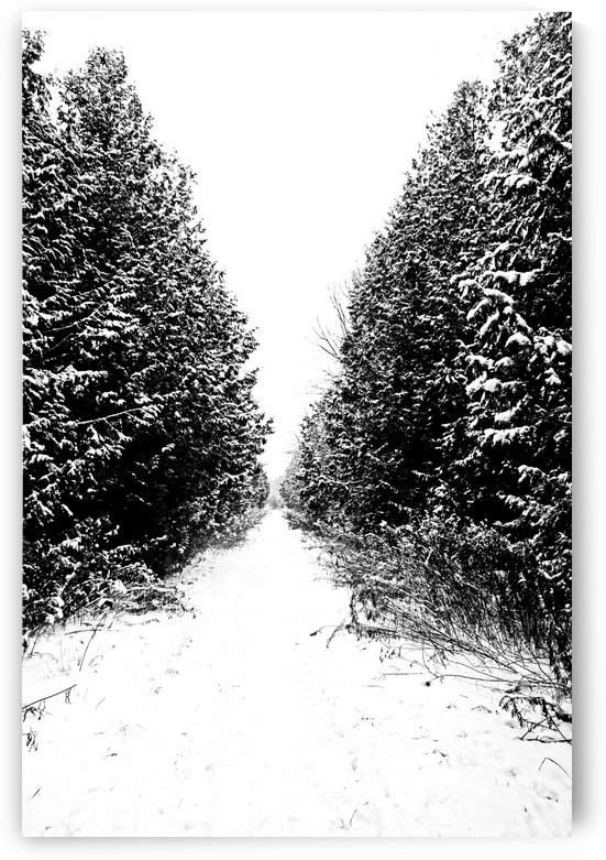 Winter Trail In Black And White by Deb Oppermann