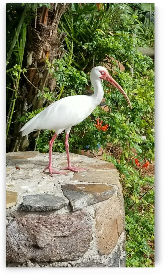 White Ibis  by Aaliyah