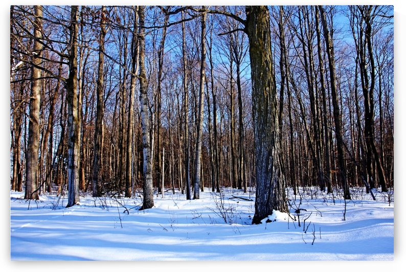 Snowy Woods by Deb Oppermann