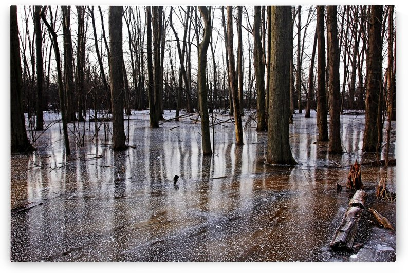 Iced Pond by Deb Oppermann