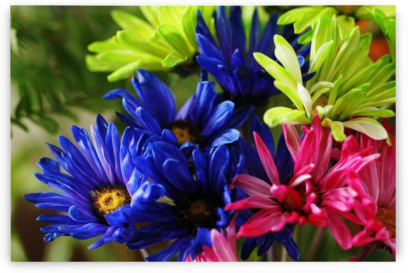 Vibrant Chrysanthemums by Deb Oppermann