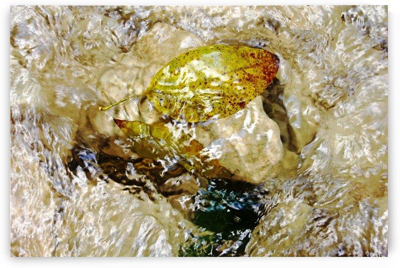 Caught On Rocks Damajagua River by Deb Oppermann