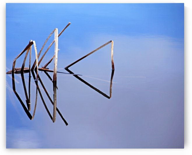 Cattail In Reflection by Deb Oppermann