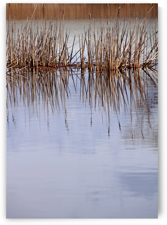 Cattail Abstract I by Deb Oppermann