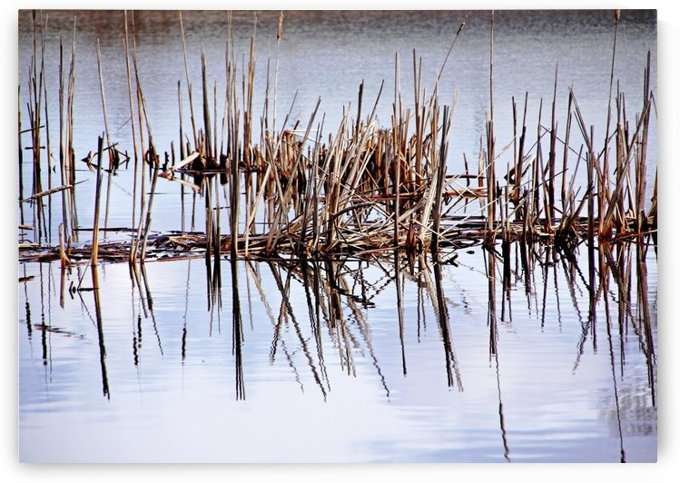 Cattail Abstract III by Deb Oppermann