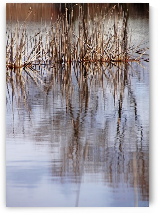 Cattail Abstract by Deb Oppermann