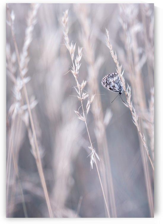 Summer breeze... by Mélodie Schaeffer