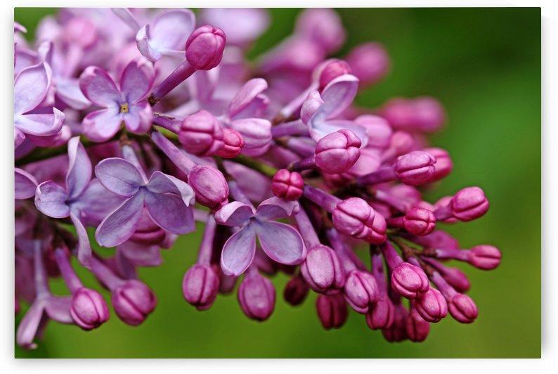 Fragrance Of Spring by Deb Oppermann