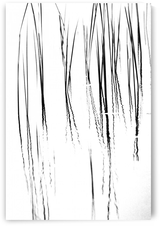 Cattails Black And White by Deb Oppermann