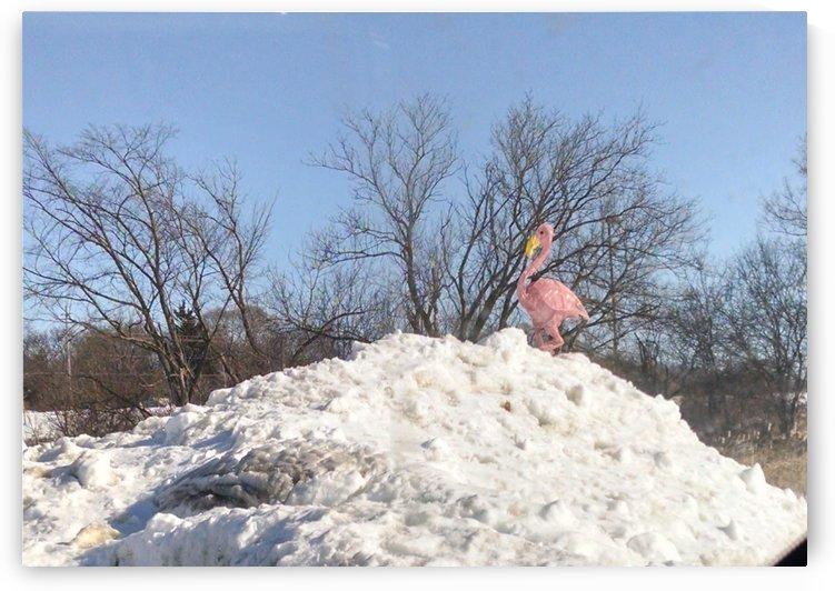 snowbird by Wendy A Rohn