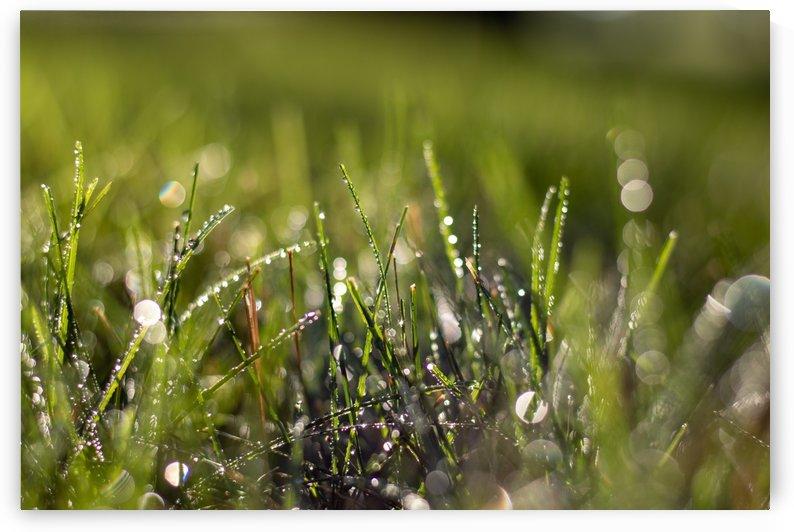Dew Drops by Noah E Geist