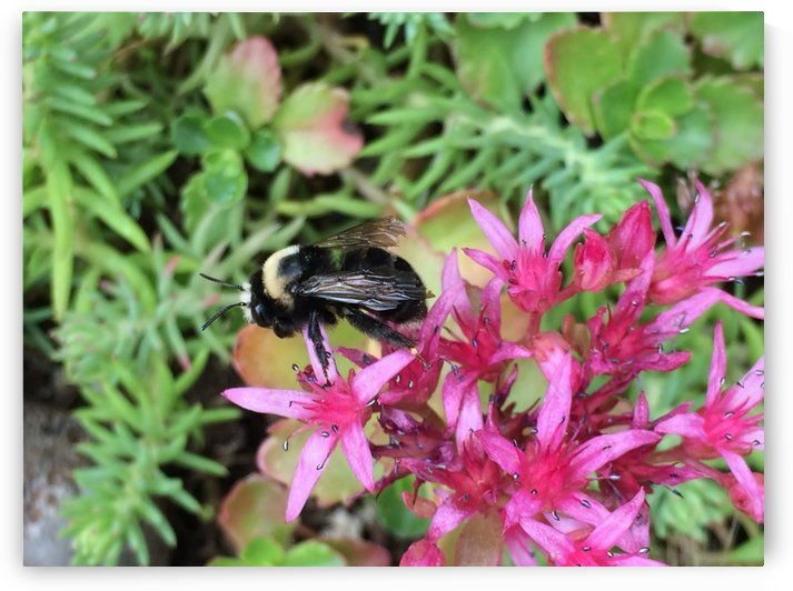 Bumblebee Visitor by Bear & Badger