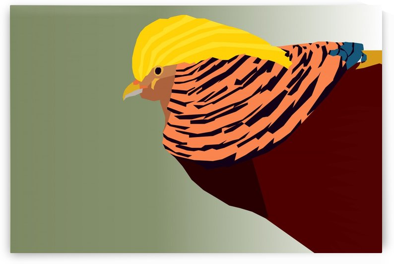 GOLDEN PHEASANT BIRD ART    by rizu_designs