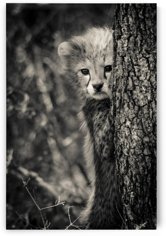 Shy but Curious by JADUPONT PHOTO
